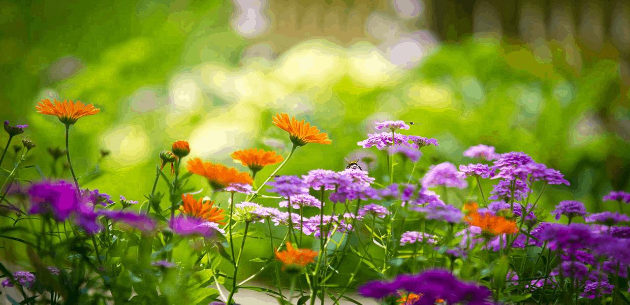 Primavera Albin